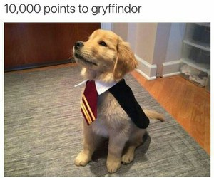 dog, harry potter, and cute image