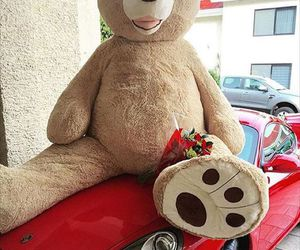 teddy, car, and red image