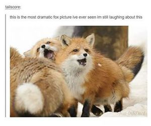 fox, funny, and jokes image