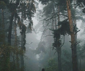 forest, jungle, and lonely image