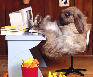 funny, rabbit, and work image