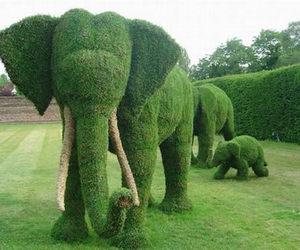 elephant, green, and garden image