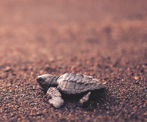 animal, cute, and turtle image