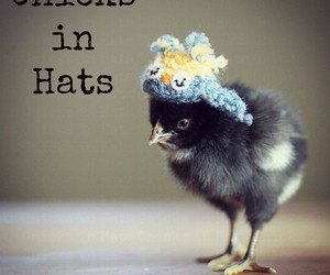 adorable, chicks, and wear image