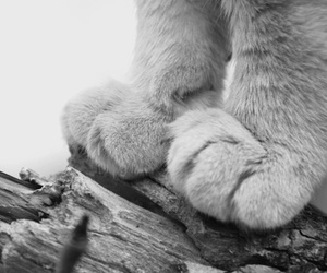 animals, paws, and black and white image