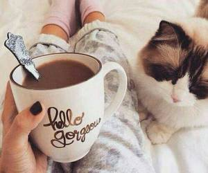 cat, coffee, and morning image
