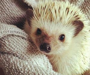 adorable, animals, and hedgehog image