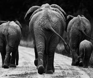 elephant and black image