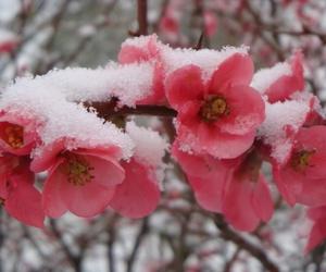 snow, winter, and cherry image