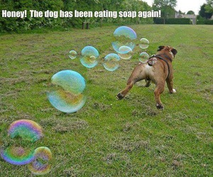 bubbles, dog, and lol image