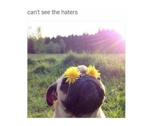 haters, dog, and funny image