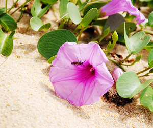 beach, flower, and green image