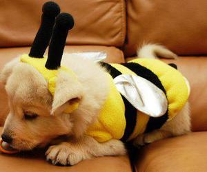 dog, cute, and bee image