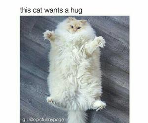 animal, hug, and cat image