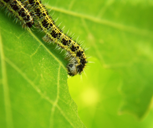 awesome, caterpillar, and close up image