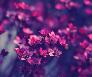 branches, flowers, and breathe image