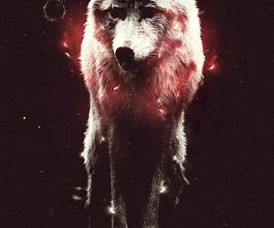 black, wolf, and hipster image