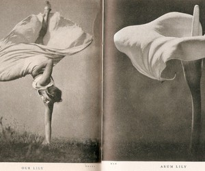1937, stefan lorant, and our lily and arum lily image