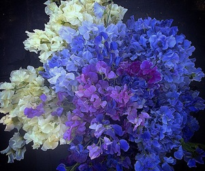 flowers, photography, and sweet peas image