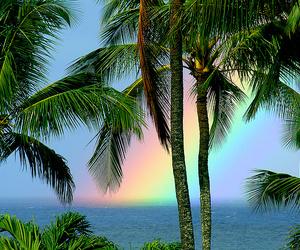 beach, rainbow, and palm trees image