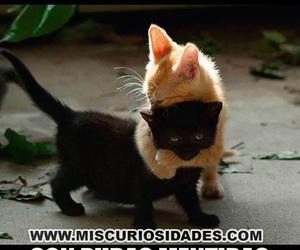 cats, Gatos, and memes image