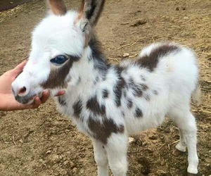 cute, animal, and donkey image