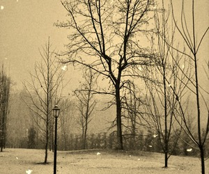 photography, tree, and winter image