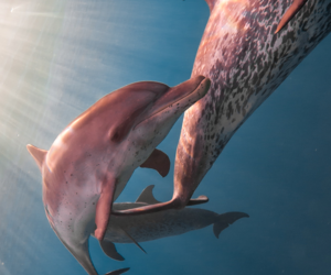 animal, dolphin, and indie image