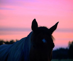 amazing, beautiful, and equestrian image