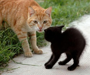 cat and black kitten image