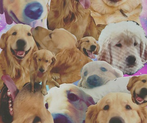 dogs, golden, and JAKe image