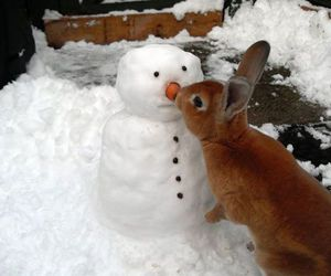 bunny, rabbit, and snow image