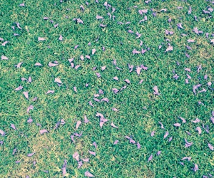 flower, grass, and iphone wallpaper image