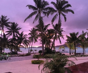 beach, palms, and purple image