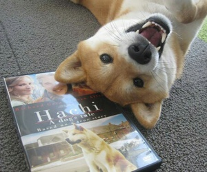 dog, cute, and hachi image