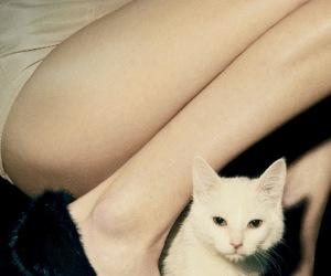 cat and legs image