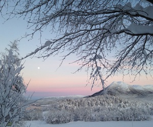 pink, pretty, and snow image