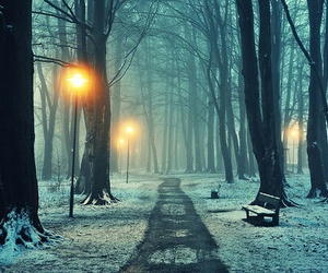 forest, lights, and snow image