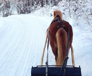 finland, horse, and nature image