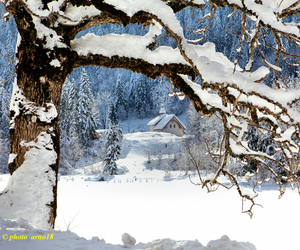 snow, winter, and saariy'squalitypictures image