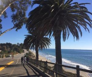 palm, Santa Barbara, and sb image