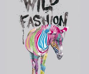 zebra, fashion, and colorful image