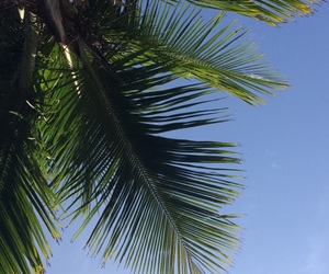beautiful day, blue sky, and palm tree image