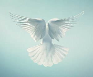 bird, white, and beautiful image