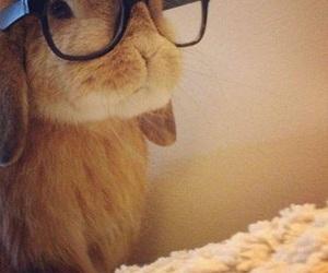 fashion, funny, and glasses image
