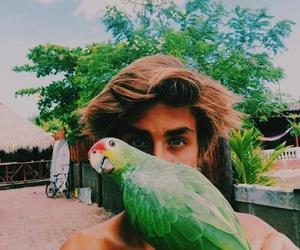 boy, bird, and summer image