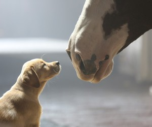 dog, horse, and cute image