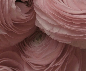 background, pink, and floral image