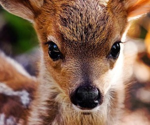 deer, animal, and baby image