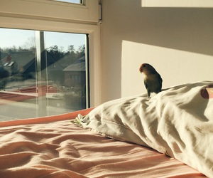 bird, parrot, and room image